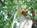 """Neal W5PVI, in a tree, helping erect an antenna before operations start. """"I grew up in East Texas."""""""