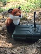 We found the Fox!